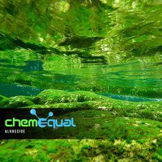 Algaecide used for killing and preventing the growth of algae. #Algaecide