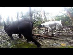 De ruta costera con los perrinos   videos desde otro punto de vista