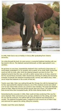 Unbelievable Story... Elephants are my favorite animals, but this story is too funny not to share.