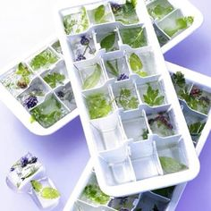 Freezing fresh herbs in ice cube trays is pure genius. Simply pop the ice cubes straight into the cooking pot! • Find out more on How To Harvest and Preserve Your Garden Herbs!