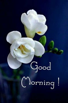 Good Morning Coffee Images, Good Morning Friends Images, Good Morning Happy Sunday, Good Morning Beautiful Quotes, Good Morning Beautiful Images, Good Morning Picture, Good Morning Greetings, Good Morning Good Night, Morning Pictures