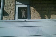 Ook een manier van uit het raam kijken