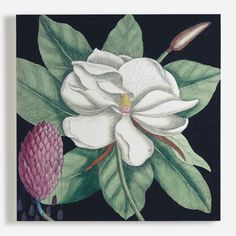 'Magnolia II' Canvas Wall Art from the The British Library collection. Canvas Art Prints, Canvas Wall Art, Wall Art Wallpaper, Floral Wall Art, British Library, Botanical Prints, Flower Vases, Flowers, Wall Murals