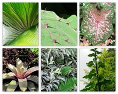 Garden Designer's Roundtable: Ideas for Adding Texture to Your Landscape « Personal Garden Coach