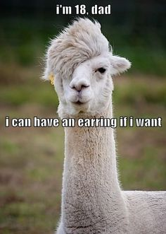 Hilarious images of the day, 121 pics. I'm 18 Dad I Can Have An Earring If I Want