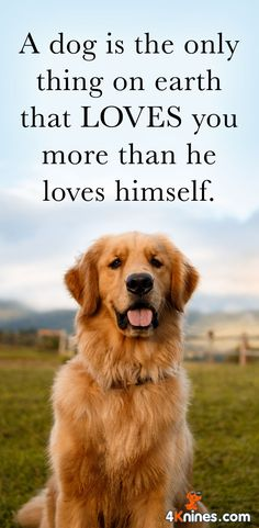 We all need a dog's unconditional LOVE and DEVOTION. <3