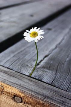 """""""Destino"""" é algo que as pessoas inventaram, porque não querem enfrentar o fato de que sua vida é moldada pelas suas escolhas... Bom dia :)"""