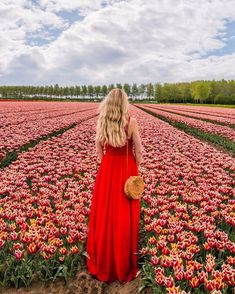 Fantastic red tulip fields in the Netherlands in Eiland Goeree Overflakkee! #tulip #tulips #netherlands #tulipfield #nederland #holland #eilandgoereeoverflakkee #spring #redktulip #red #redflowers Red Tulips, Red Flowers, Tulip Fields, I Want To Travel, Amazing Destinations, Life Is Beautiful, Netherlands, Holland, How Are You Feeling