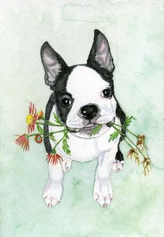 Boston Terrier painting - @earthspalette