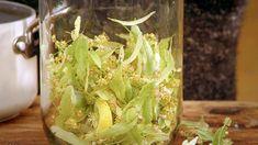 Lipové víno — Recepty — Herbář — Česká televize Cabbage, Recipies, Vegetables, Drinks, Food, Recipes, Drinking, Beverages, Essen