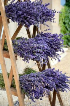 The Three Basics for Growing Lavender in the Herb or Flower Garden