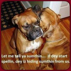 two beautiful boxers, telling secrets. ❤️Boxers