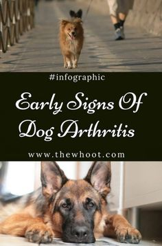 Dog Arthritis Early Signs And Symptoms