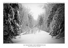 Le sentier est recouvert de glace après une tempête de verglas qui a durée trois jours. Les arbres, trop lourd à cause du poids de la glace se couchent sur le sentier. J'entendais les branches des arbres se casser dans la forêt et d'autres s'effondrer... Les risques d'être photographe nature!  (Prise à Shefford, Québec, Canada) Branches, Monochrome, Canada, Snow, Outdoor, Pathways, Fresh, Drill Bit, Ice