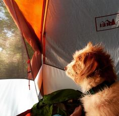 If you have a picture of your dog on an epic outdoor adventure please post in the comments below. Funny Dog Images, Funny Dogs, Beautiful Morning, Beautiful Dogs, Doggies, Dogs And Puppies, Outside Dogs, Outdoor Dog, Dog Mom