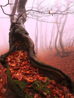 The Ancient Pagan Tree by Martin Rak