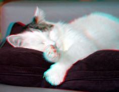 https://flic.kr/p/CcWJpS | Our cat Patch anaglyph | Patch 3D anaglyph stereo red/cyan