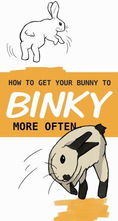 Rabbit Toys, Bunny Toys, Pet Rabbit, Pet Bunny Rabbits, Dwarf Bunnies, Indoor Rabbit House, Bunny Rescue, Bunny Jump, Rabbit Habitat