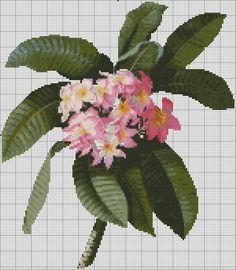 phrododendron