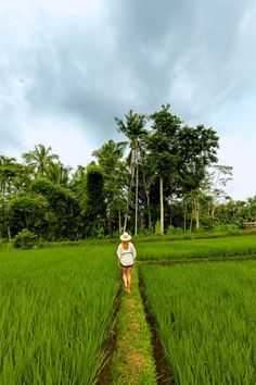 A 20-minute walk from the urban bustle of Ubud, the landscape around the Tegalalang rice terrace confirms Bali's soulsoothing reputation.