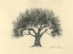 Die 14 Besten Bilder Von 03 08 0017 Bäume Zeichnungen Drawing