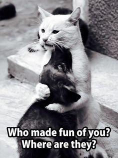 na tablicy Humor ;d przypisanej do kategorii Humor Funny Animal Pictures, Funny Photos, Funny Animals, Cute Animals, Funny Shit, Funny Cute, Hilarious, Memes Humor, Funny Cat Memes