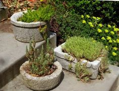 make your own concrete troughs, concrete masonry, diy, gardening, succulents, Voila Succulents are the perfect plant for hypertufa they fill up every nook