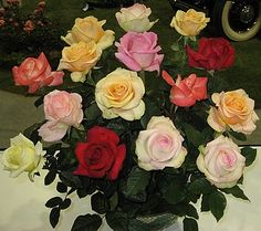 How To Grow Roses That Are Healthy And Have Lots Of Flowers {gardening-advice.net}