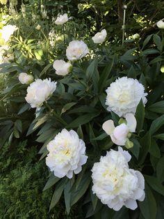 Flower Garden Plans, Florida Plants, Yard Landscaping, Garden Planning, Backyard, Gardening, Landscape, Flowers, Gardens