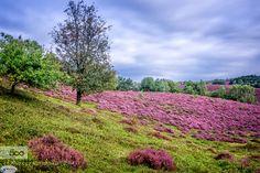 Posbank Nationaal park de Veluwezoom by JaapMechielsen #landscape #travel