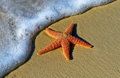 The starfish story and what it can teach us about life. I don\'t remember exactly how I came across this story. All I know is that each time I see a starfish on the beach or while snorkeling, I immediately remember the little boy rushing to save the starfish ... www.salvinastreas... #thestarfishstory