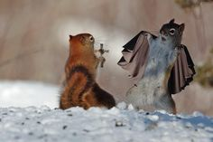 The 14 Best Photoshops Reddit Made Of These Two Funny Looking Squirrels from Best of th...