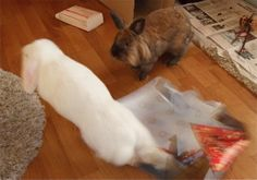 Duncan i farta!!! Jeg henter gaven som skal pakkes inn assa!!! / Me - Duncan - in action!! Bringing presents for wraping !!! 2014/IJ