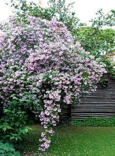 Balcony Garden, Garden Beds, Garden Plants, Garden Living, Home And Garden, My Secret Garden, Dream Garden, Go Outside, Garden Inspiration