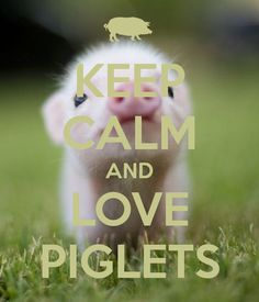 KEEP CALM AND LOVE PIGLETS - KEEP CALM AND CARRY ON Image ...
