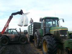 Seeding maize