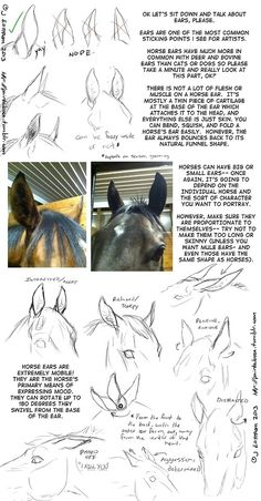Read more about drawing tutorial Horse Drawings, Animal Drawings, Art Drawings, Drawing Art, Anatomy Drawing, Drawing Techniques, Drawing Tips, Drawing Reference, Animal Sketches