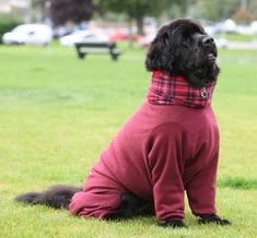 32af9d70d72 Cachorros de roupa  fotos fofas para alegrar o seu dia