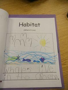Ms. M.'s KG Class: Kindergarten Informational Non-Fiction Report Writing