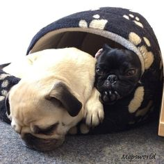 """""""They said two of us couldn't fit in here. We showed them!"""""""