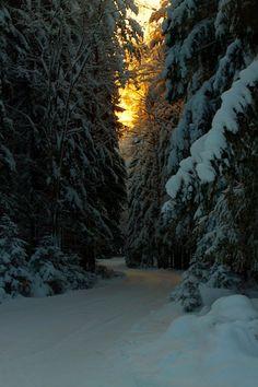 bluepueblo: Winter Spruce Road, Finland photo via andr Winter Pictures, Nature Pictures, Terre Nature, Winter Love, Winter Magic, Winter Scenery, Snow Scenes, Winter Beauty, Winter Landscape