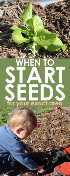 Grow Organic Tomatoes Seed Starting Planner: This seed starting tool will help you determine when to plant seeds for your zone. Just type in your last frost date, and the spreadsheet does the rest! Garden Types, Garden Seeds, Planting Seeds, Growing Plants, Growing Vegetables, Gardening For Beginners, Gardening Tips, When To Plant Seeds, When To Plant Garden