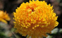 Imagini pentru flori de toamna