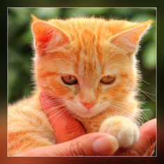 Ahhh, cute kitten! Don't you just love cats?