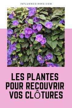 12 climbing plants to fence off your garden Gardening Magazines, Permaculture, Local Plant, Plants, Garden, Garden Terrarium, Potager Garden, Small Flower Pots, Climbing Plants