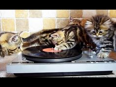 DJ Kittens - I hope this is an old record no one wants.....lol