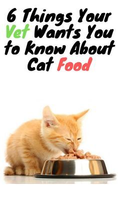 Learn About Six Things Your Veterinarian Probably Wants You To Know But Won T Tell You As They Work Hard To Take C In 2020 Kittens Funny Cat Food Cute Cats And