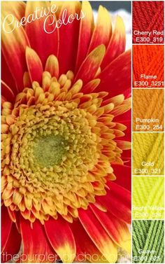 Creative Colors – Gerber Daisy – Fall Palette – The Purple Poncho! Get your color inspiration for your next craft project. #yarn #color #gerberdaisy