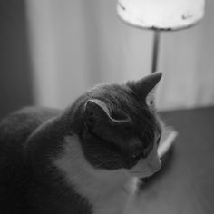 Neko. #cat #gato #lamp #lámpara #table #mesa #home #casa #madrid