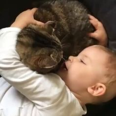 There Is Nothing Cuter Than Kids With Their Fluffy Friends - I Can Has Cheezburger? - Funny Cats | Cat Meme | Cat Pictures
